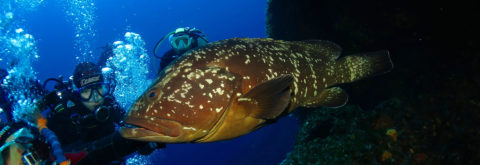 Best dives on Island of Elba, Pianosa and Capraia